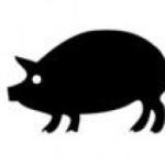 Sex Tipps, Affairen und Schweinereien