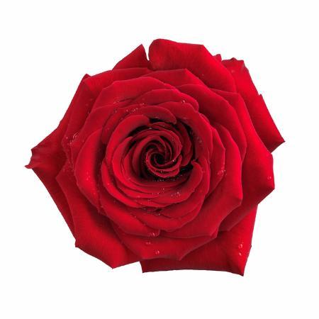 Liebessprüche - Lustige Flirtsprüche für die Liebe