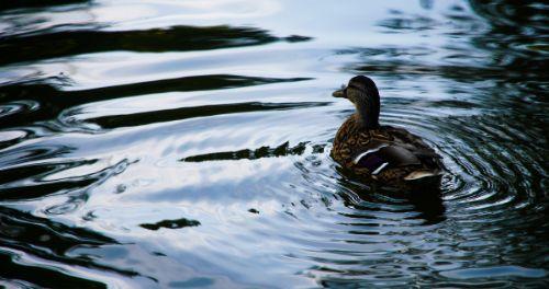 Die schönsten Ideen für das erste Date um sich kennenzulernen zusammen Enten füttern und schwimmen gehen