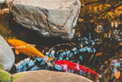 Das Horoskop Fische und das Sternzeichen Fische
