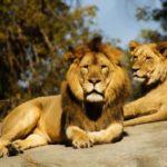 Woche der Sternzeichen: Alles über das Horoskop Löwe