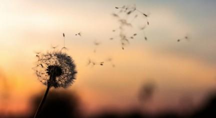 97 Schöne Lebensweisheiten zum Nachdenken und Träumen