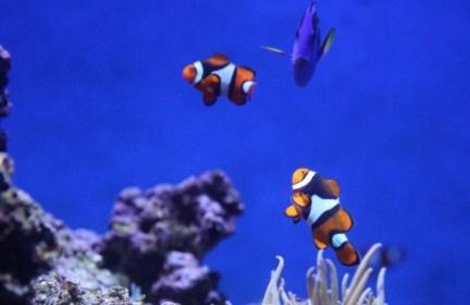 Woche der Sternzeichen: Alles über das Horoskop Fische